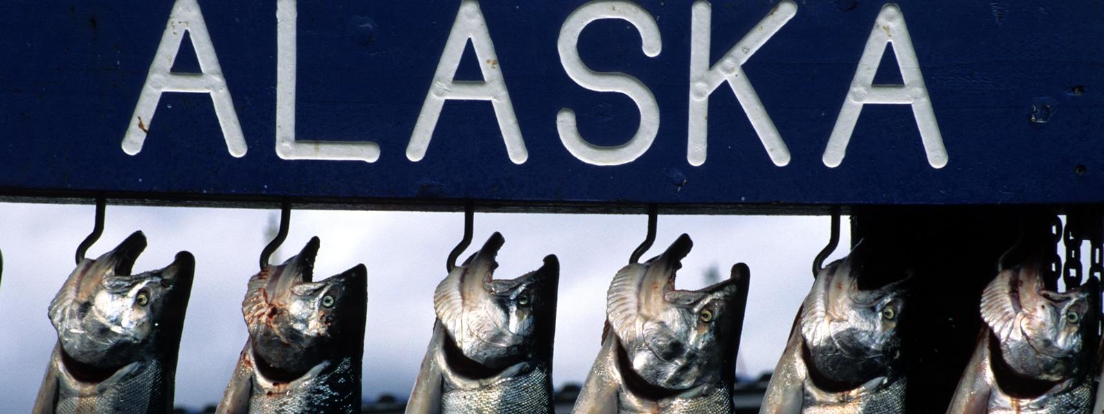 Salmon - AK