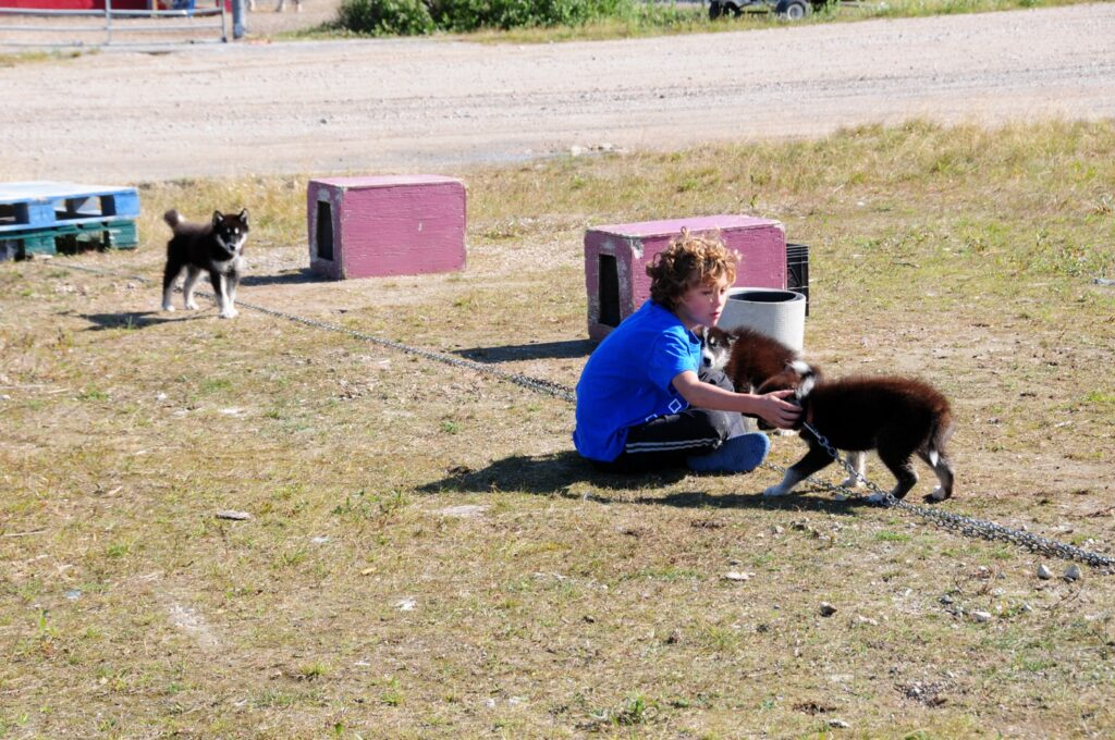 צ'רצ'יל - יובל עם הכלבים