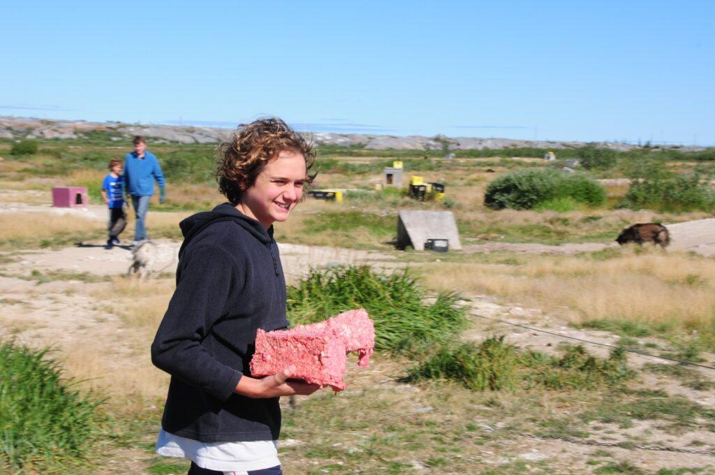צ'רצ'יל - עומר הצמחוני מחזיק נתח בשר