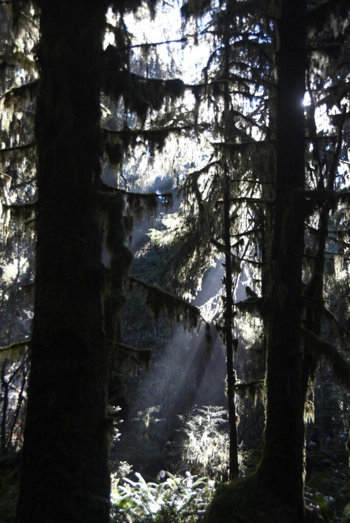 שמורת אולימפיק יער הגשם הו