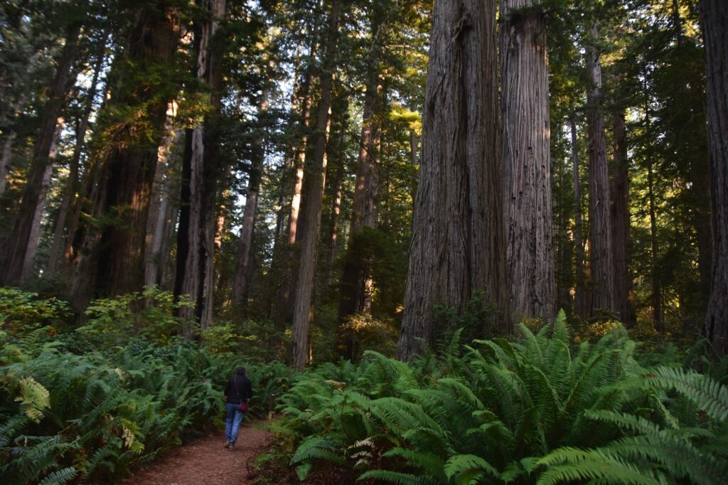 פארק רדווד, עצים ושרכים