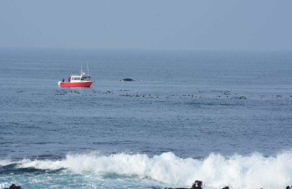לווייתן מבצבץ