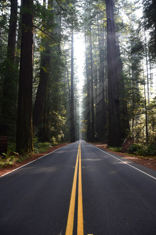 צילומי טבע ביערות הרדווד