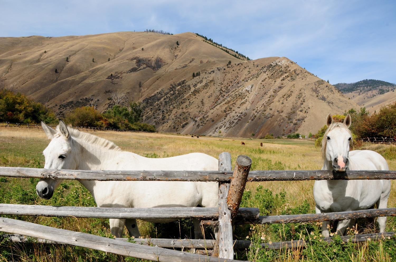 """רוד טריפ בצפון מערב ארה""""ב סוסים באיידהו"""