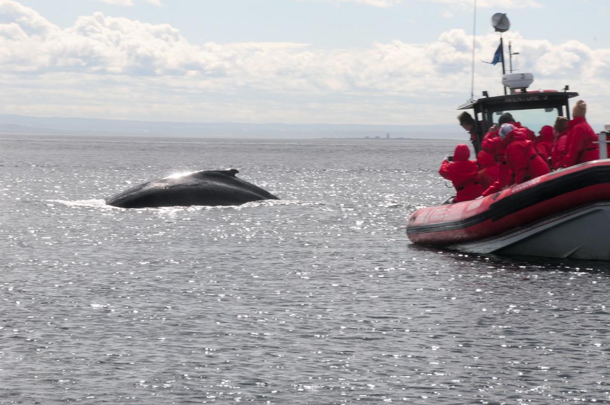 10 המקומות היפים ביותר במזרח קנדה - שיט לווייתנים